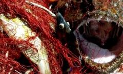 La vendita diretta: un'opportunità per gli operatori della piccola pesca artigianale